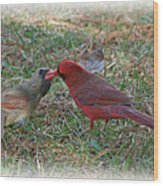 Kissing Cardinals Wood Print