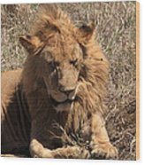 Lions Of The Ngorongoro Crater - Tanzania Wood Print
