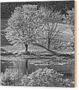Long Pond On Mount Desert Island In Maine Wood Print