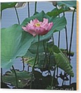 Lotus Flower At Calloway Wood Print