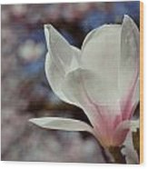 Magnolia Flowers In Spring Time Wood Print