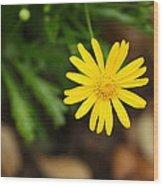 Marguerite Yellow Daisy Wood Print