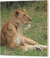 Masai Mara Lioness Wood Print