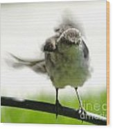 Mockingbird Dance Wood Print