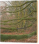 Moss-covered Big Leaf Maple Branches Wood Print
