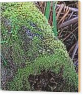 Mossy Dead Log Wood Print