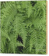 Mountain Ferns Of North Carolina Wood Print