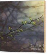 Natural Lightness Of Being Wood Print
