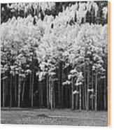 New Mexico Aspens Wood Print