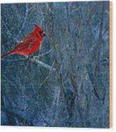 Northern Cardinal Wood Print by Thomas Young