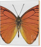 Orange Butterfly Species Appias Nero Neronis  Wood Print