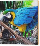 Parrot Greeting Card Wood Print
