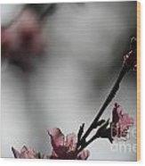 Peach Blossom II Wood Print