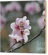 Peach Blossoms I Wood Print