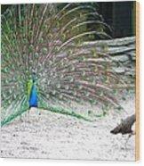 Peacock Making An Impression Wood Print
