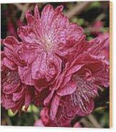 Pink Cluster Rhodie Img_2879 Wood Print