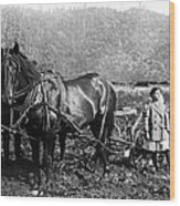 Plowing The Land C. 1890 Wood Print