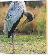Preening Wood Stork Wood Print