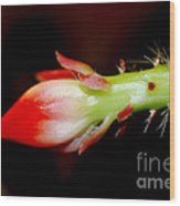 Red Orchid Cacti Bloom Wood Print