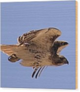 Red Tail Hawk Wood Print