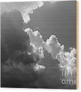 Seagulls In Flight Mb058bw Wood Print
