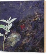 Semi Abstract Nature 2 Wood Print