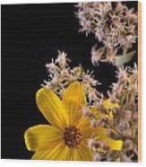 Shy Yellow Flower Wood Print