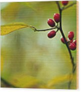 Spicebush With Red Berries Wood Print