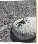 Spider In The Sun Wood Print