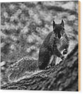 Squirrel In The Park V3 Wood Print