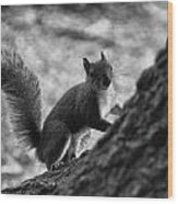 Squirrel In The Park V4 Wood Print