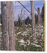 The Fenceline Wood Print