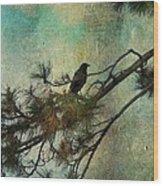 The Old Pine Tree Wood Print