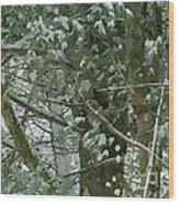 Tree Branch Wood Print