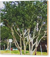 Trees In A Suburban Neighborhood In Summer Wood Print