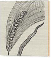 Triticum Lucidum  Bright Wheat Wood Print