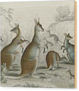 Various Kangaroos  Lord Derby's, Aroe Wood Print