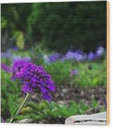 Violet Flower Wood Print