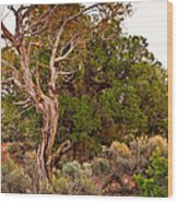Weathered Tree Sunrise Canyon Dechelly Wood Print