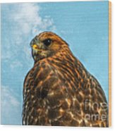 What Are You Looking At Red Shoulder Hawk Wood Print