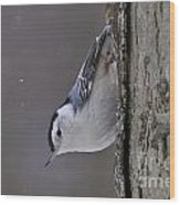 White-breasted Nuthatch Pictures 27 Wood Print