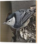 White-breasted Nuthatch Pictures 35 Wood Print