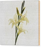 White Gladiolus Mixed Media Painting Wood Print