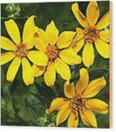 Yellow Texas Wildflowers Wood Print
