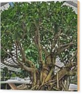001 Bonsai Summer Show Buffalo Botanical Gardens Series Wood Print