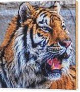 001 Siberian Tiger  Wood Print