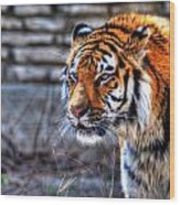 0010 Siberian Tiger Wood Print