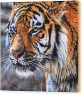 0013 Siberian Tiger Wood Print