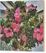 002 Bonsai Summer Show Buffalo Botanical Gardens Series Wood Print