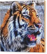 002 Siberian Tiger Wood Print